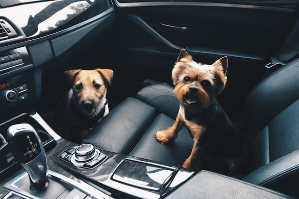 two small dogs in seat BMW Air Conditioning